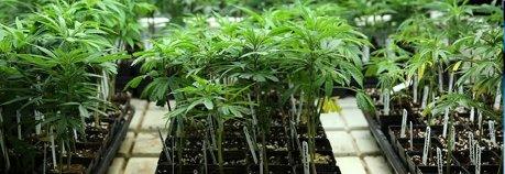 Los inspectores de Hacienda piden legalizar prostitución y drogas blandas