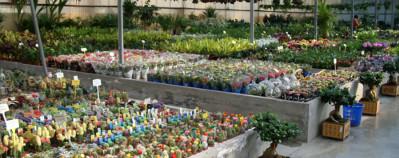 El IVA de plantas, flores y semillas baja del 21% al 10% en 2015